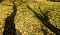 Tree shadows fall Gamla Uppsala